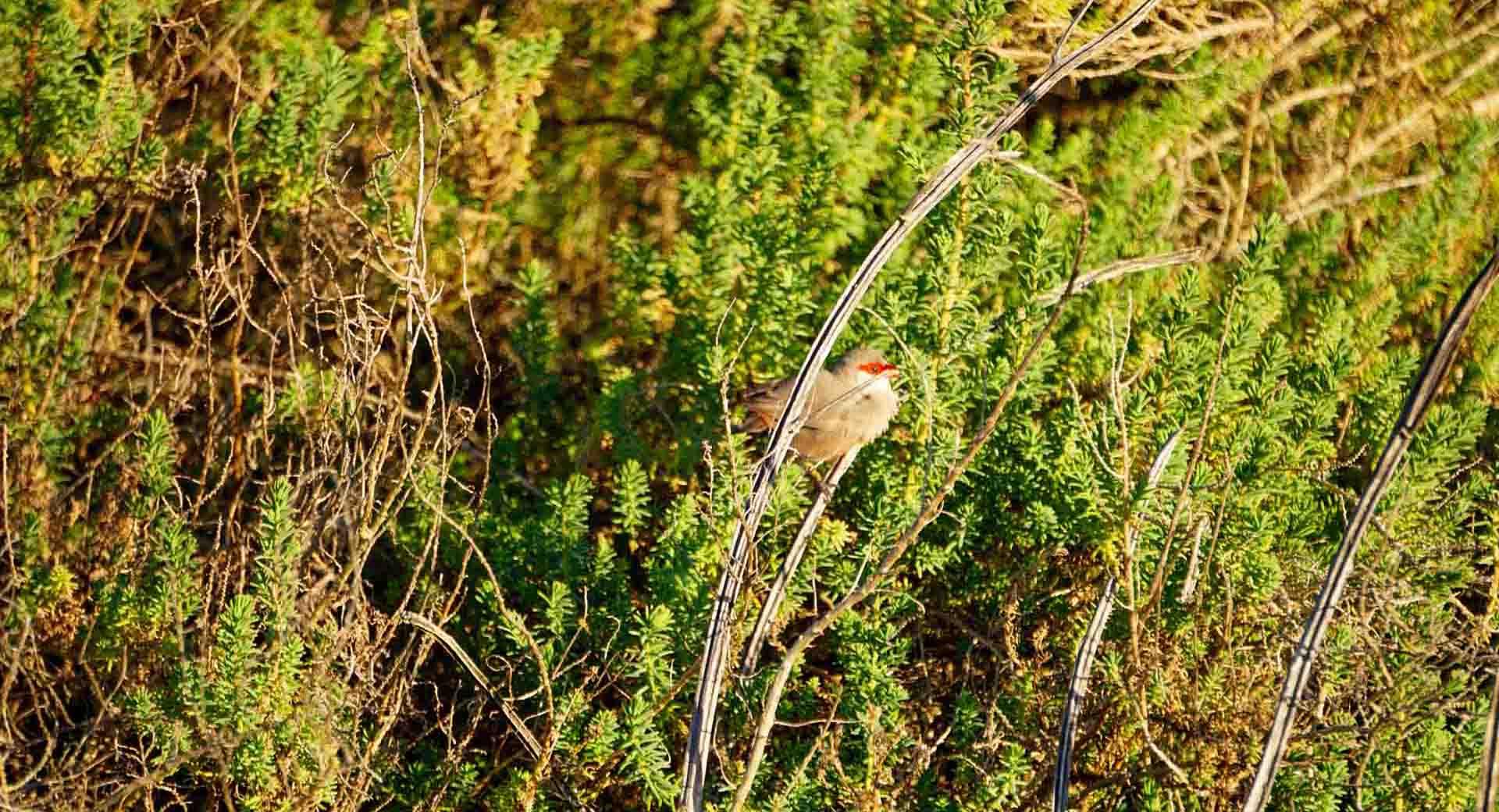 birdwatching-evoa-riserva-naturale-
