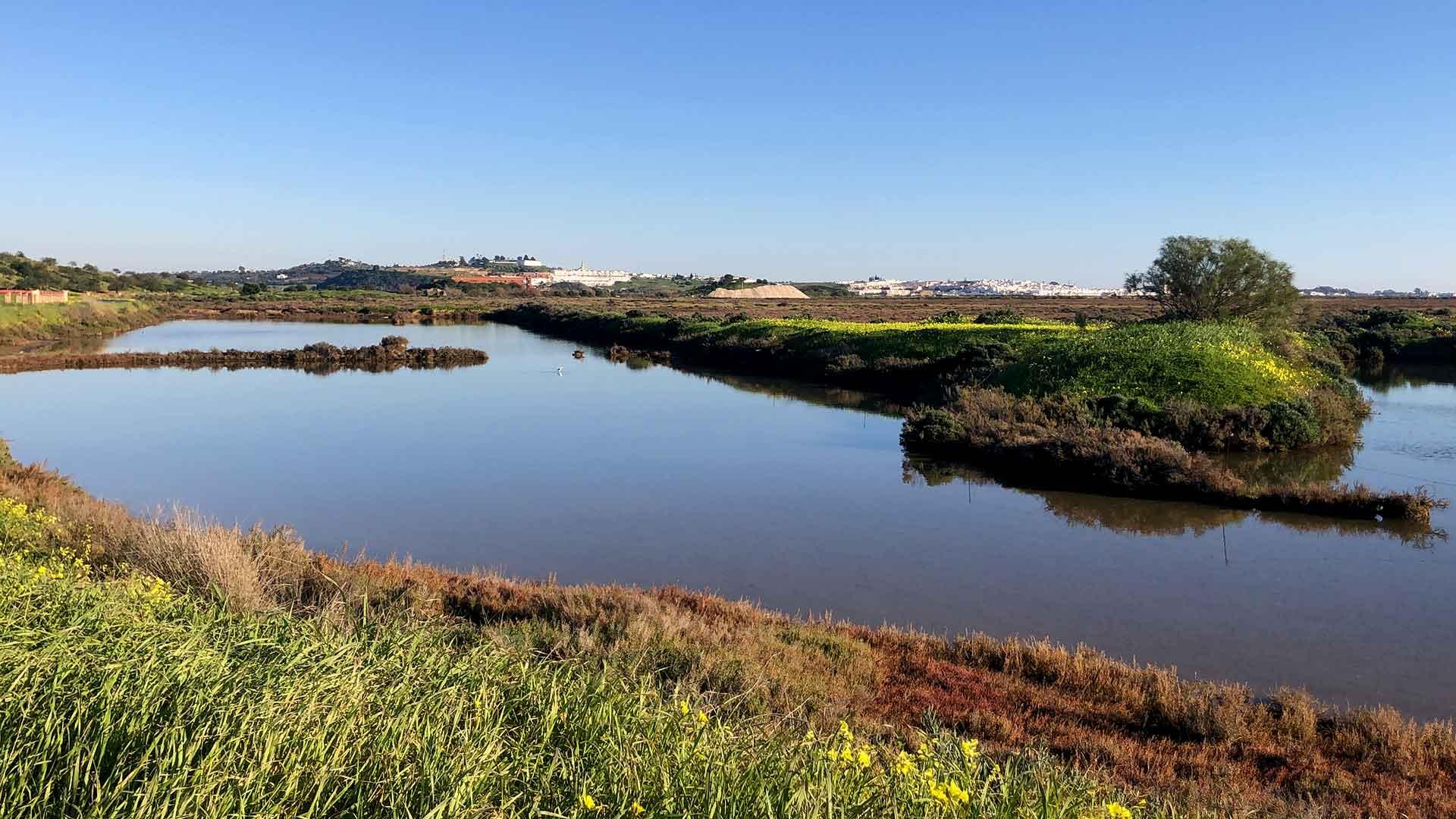 Reserva Natural do Sapal de Castro Marim e Vila Real de Santo António birdwatching