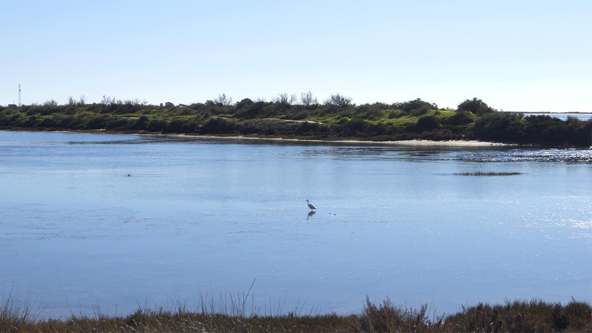 vacanza in algarve all'insegna del birdwatching al ria formosa natural park