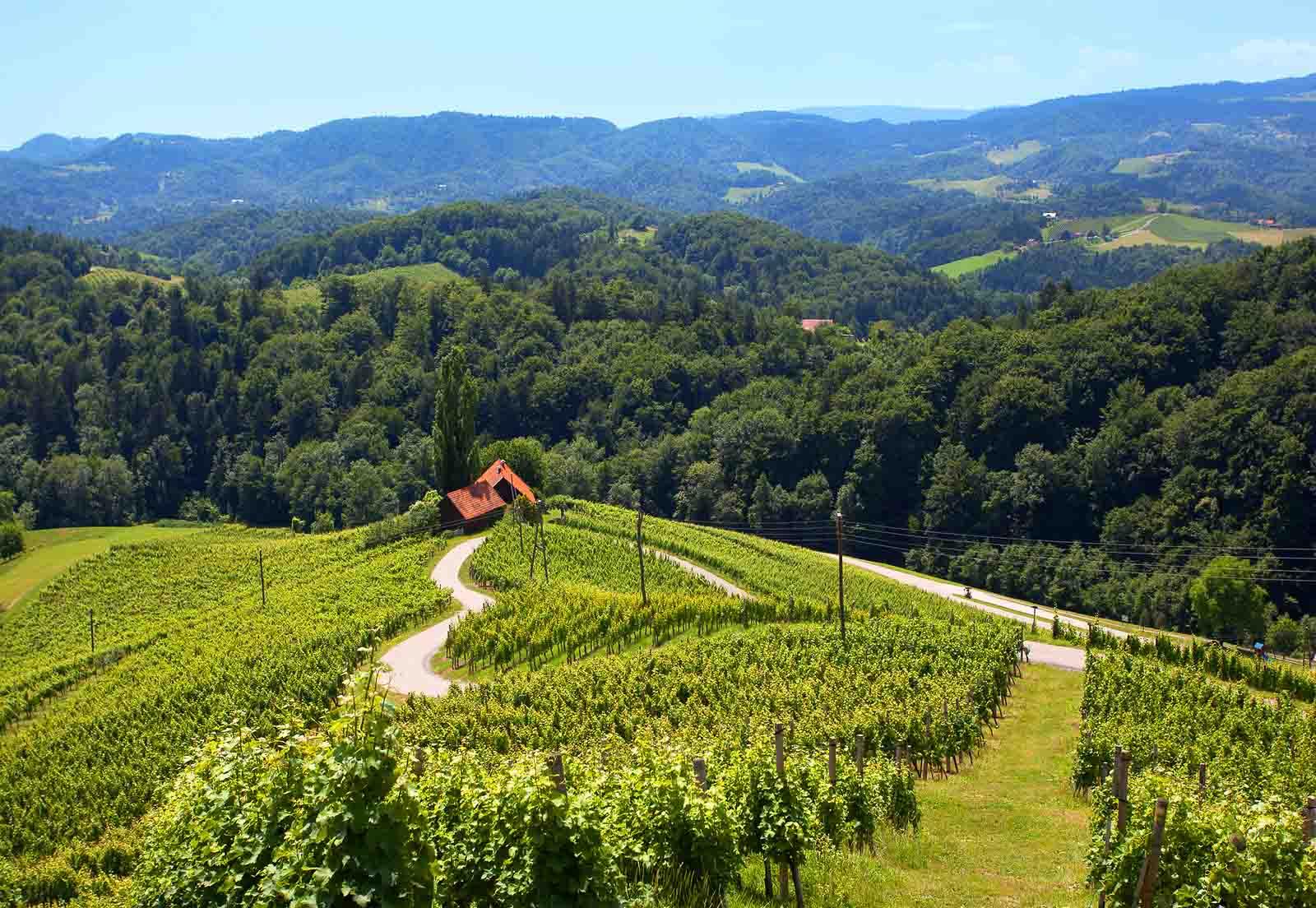 strada a forma di cuore tra i vitigni sloveni