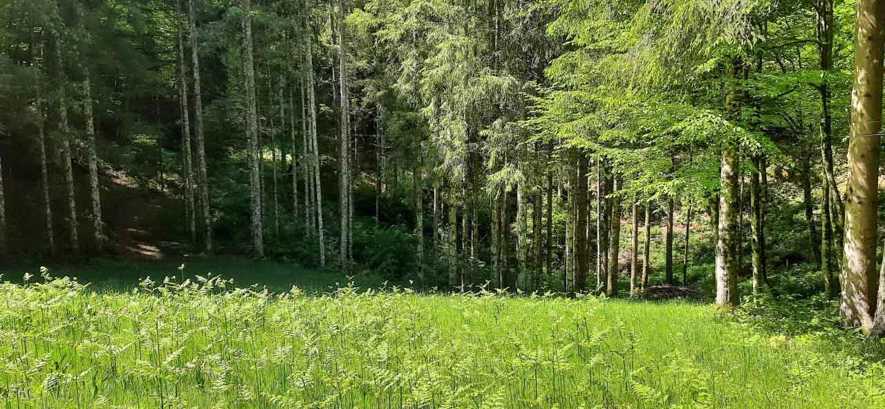 foresta della Slovenia nella regione del Kocevsko