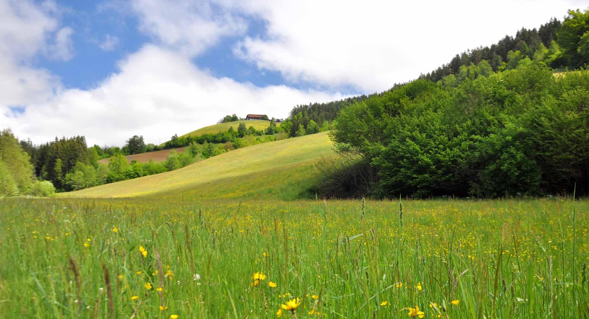 panorama e prati nella regione della koroska in slovenia